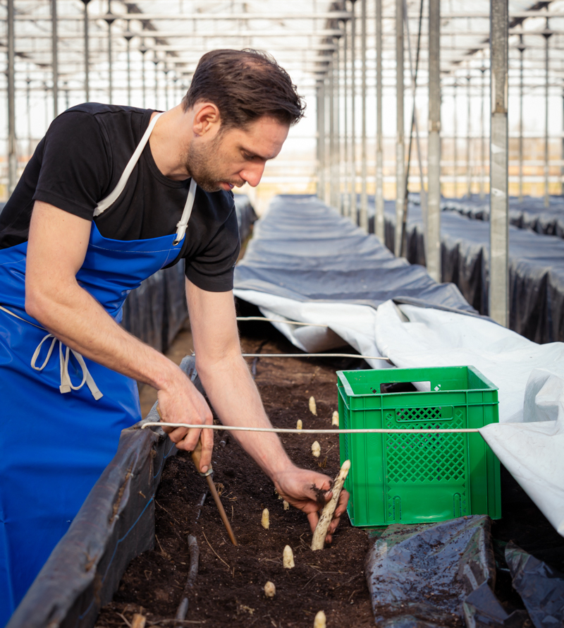 De Lierse asperges - Vers uit het zand, recht naar de klant!
